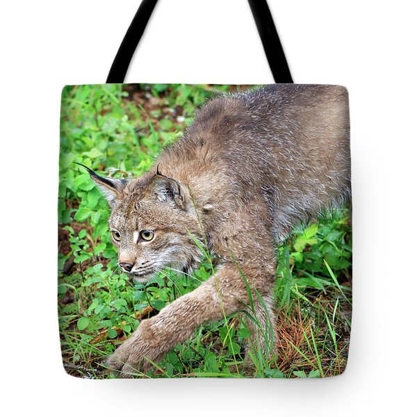 Canada Lynx Lynx Canadensis Tote Bag by Louise Heusinkveld