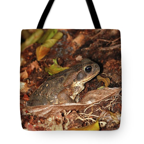 Cane Toad Tote Bag