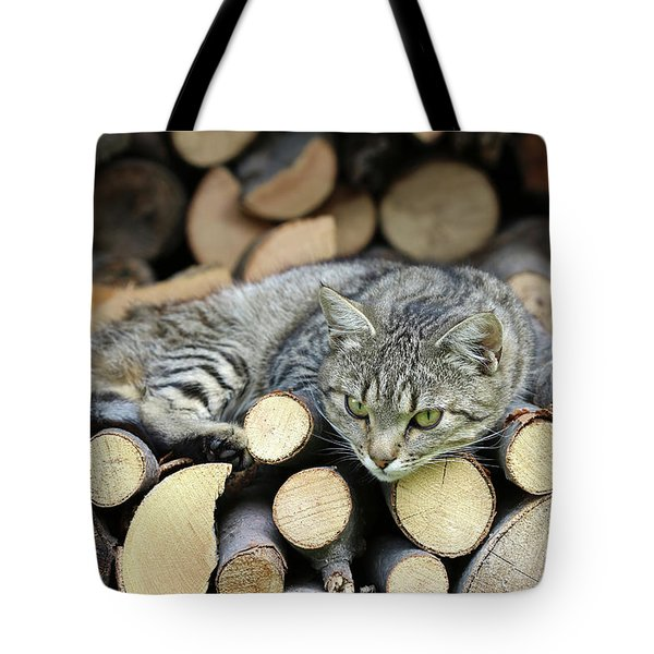 Tote Bag featuring the photograph Cat Resting On A Heap Of Logs by Michal Boubin