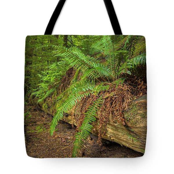 Cathedral Grove Tote Bag