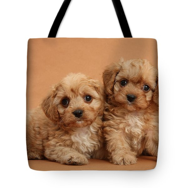 Cavapoo Pups Tote Bag by Mark Taylor