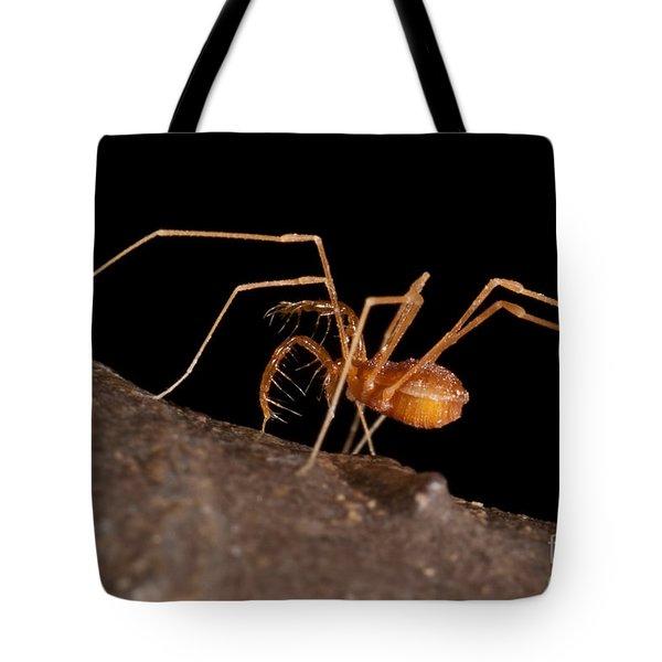 Cave Harvestman Tote Bag