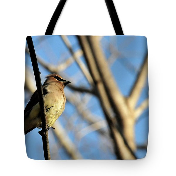 Cedar Wax Wing Tote Bag by David Arment