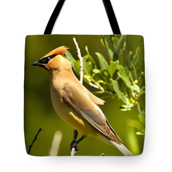 Cedar Waxwing Closeup Tote Bag by Adam Jewell