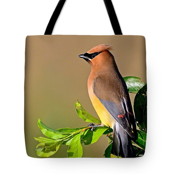 Cedar Waxwing Tote Bag by Rodney Campbell