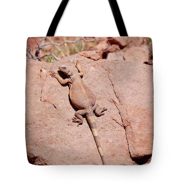 Chuckwalla, Sauromalus Ater Tote Bag