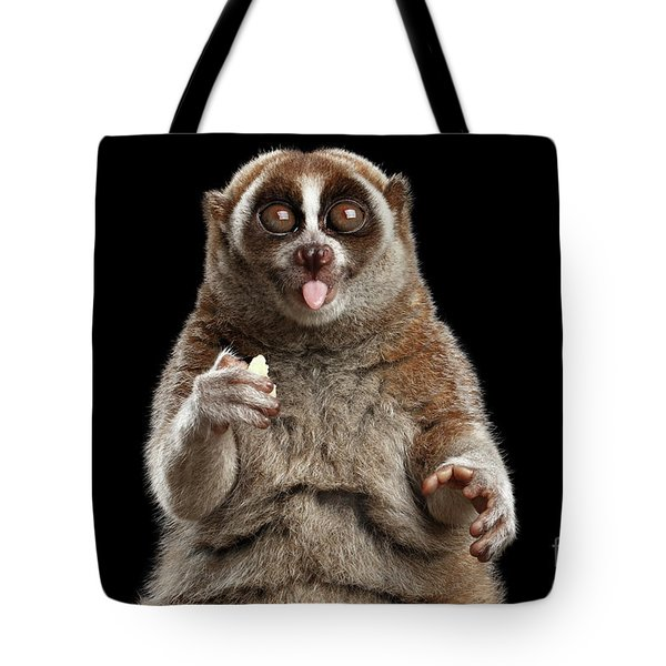 Close-up Lemur Slow Loris Isolated Black Background Tote Bag