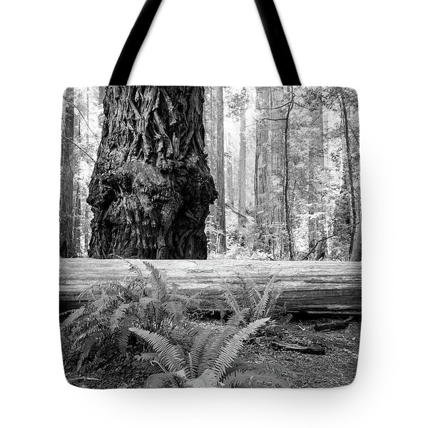 Tote Bag featuring the photograph Coastal Redwoods  by Vincent Bonafede