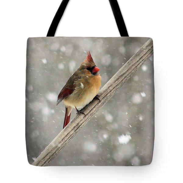 Cold Cardinal Tote Bag