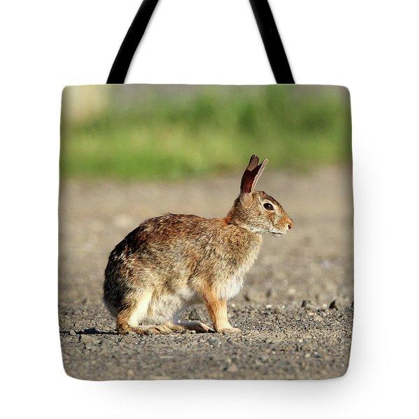 Cottontail Rabbit Stony Brook New York Tote Bag
