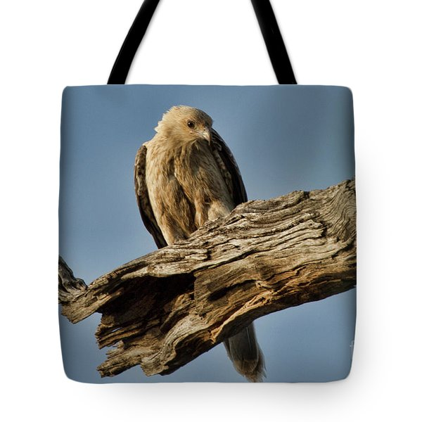 Tote Bag featuring the photograph Curious by Douglas Barnard
