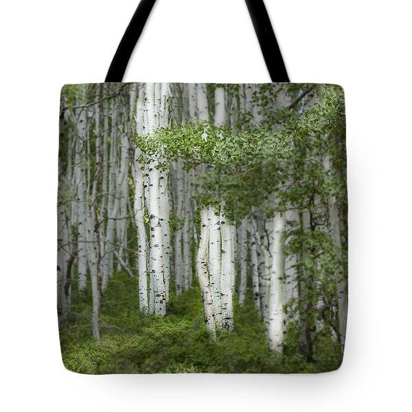 Delicate Aspens. Colorado Tote Bag