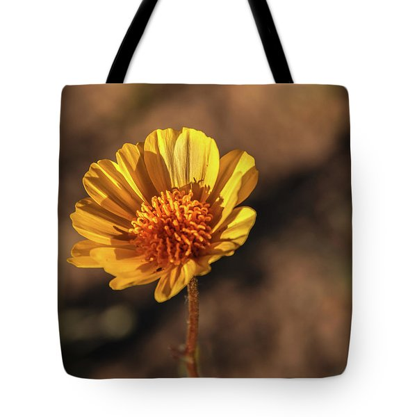 Tote Bag featuring the photograph Desert Sunflower by Robert Bales
