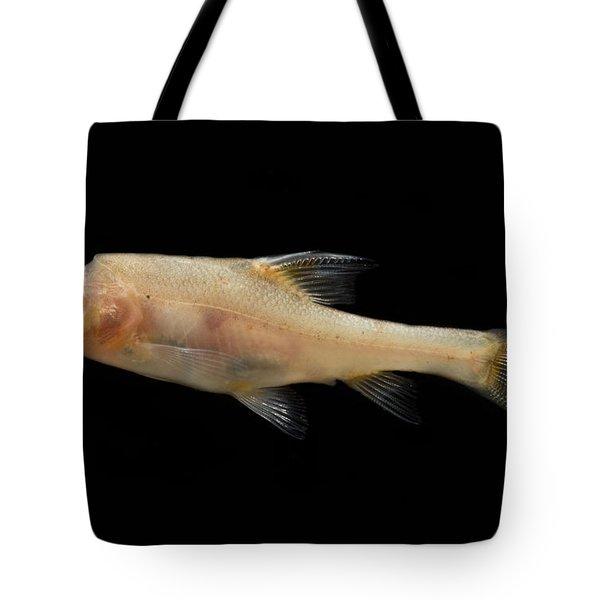 Double Horned Golden Line Barbel Tote Bag