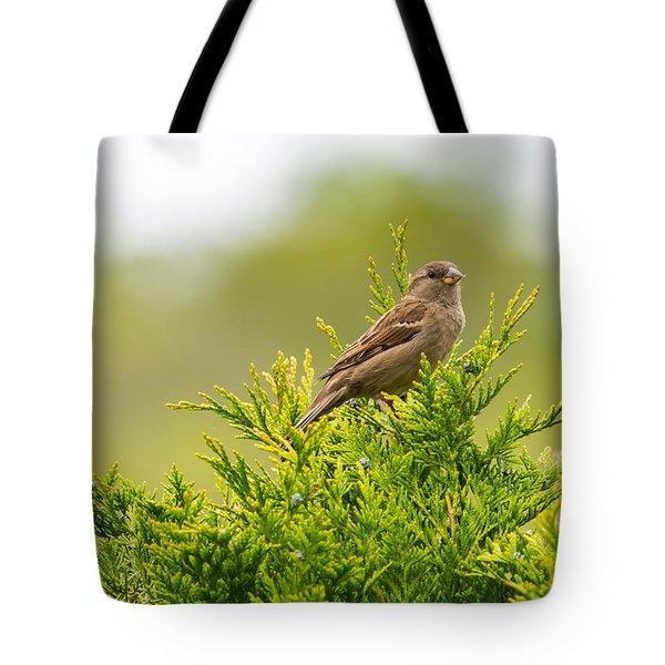Dunnok Tote Bag