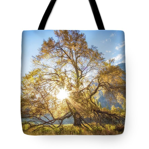 Tote Bag featuring the photograph Elm Tree  by Vincent Bonafede
