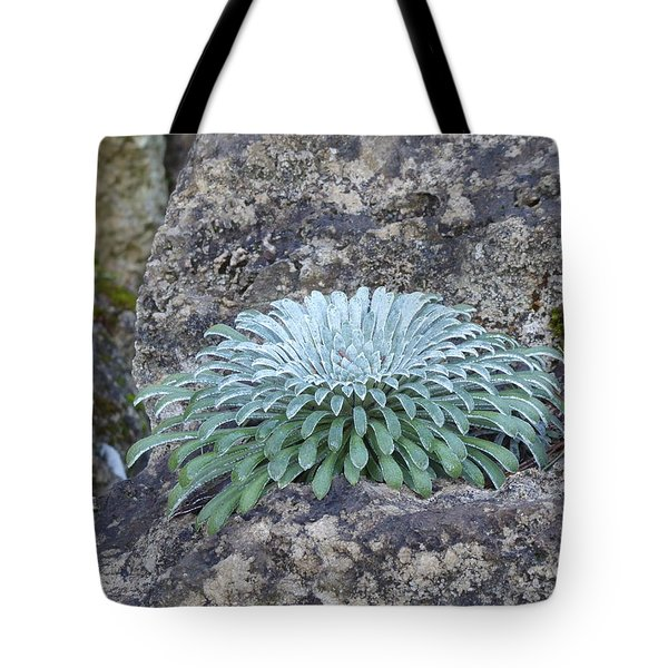 Exotic Plant Tote Bag