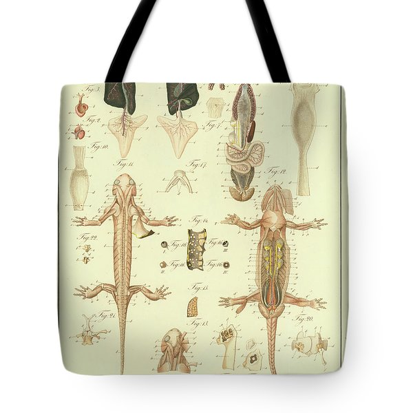 Fire Salamander Anatomy Tote Bag