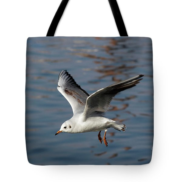 Flying Gull Tote Bag by Michal Boubin
