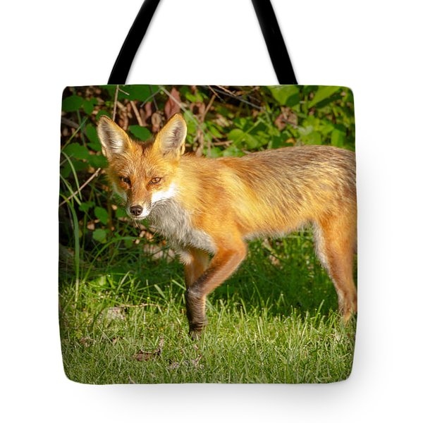 Fox Portrait  Tote Bag