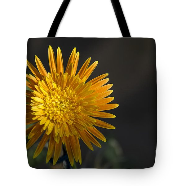 Tote Bag featuring the photograph Gerbera In Bloom by Pravine Chester