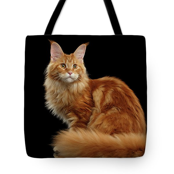 Ginger Maine Coon Cat Isolated On Black Background Tote Bag