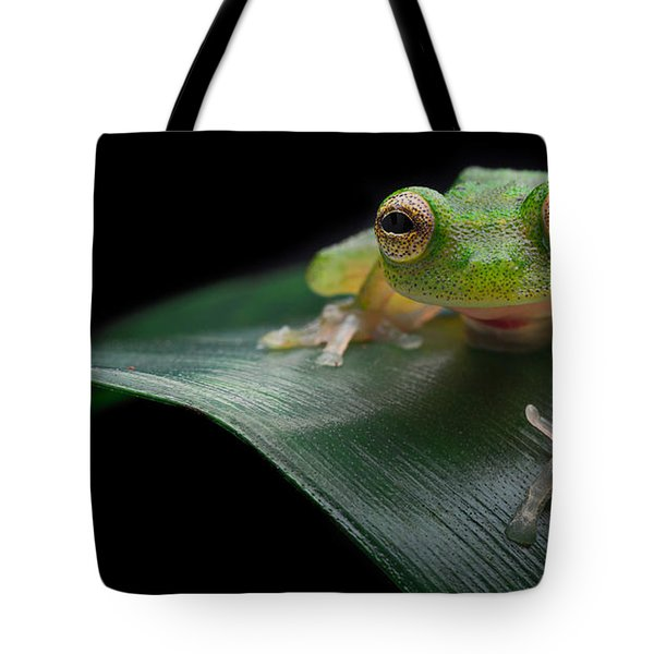 glass frog Amazon forest Tote Bag