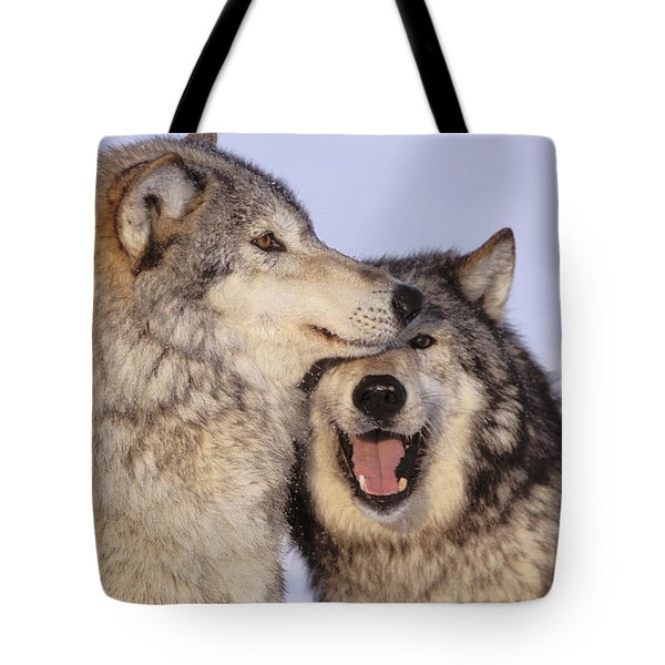 Gray Wolves Tote Bag by John Hyde - Printscapes