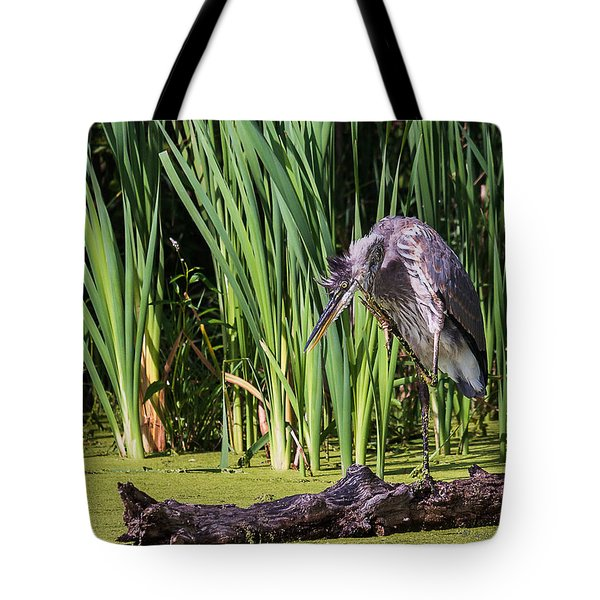 Tote Bag featuring the photograph Great Blue Heron Itch by Edward Peterson