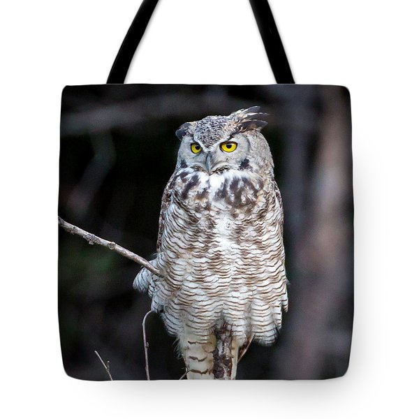 Great Horned Owl  Tote Bag by Jack Bell