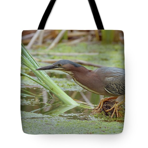 Green Heron Tote Bag by Doug Herr