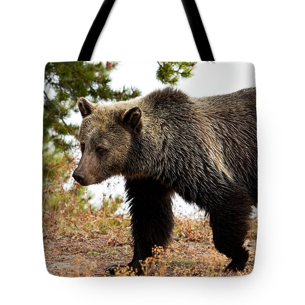 Grizz Tote Bag