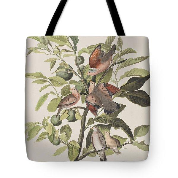 Ground Dove Tote Bag by John James Audubon