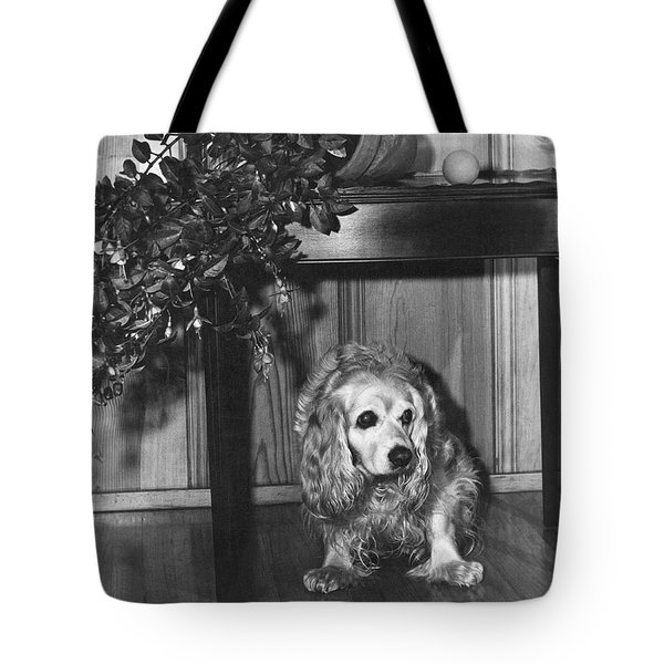 Guilty Looking Dog Tote Bag