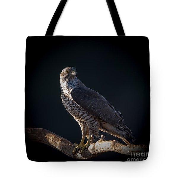 Hawk-eye Tote Bag