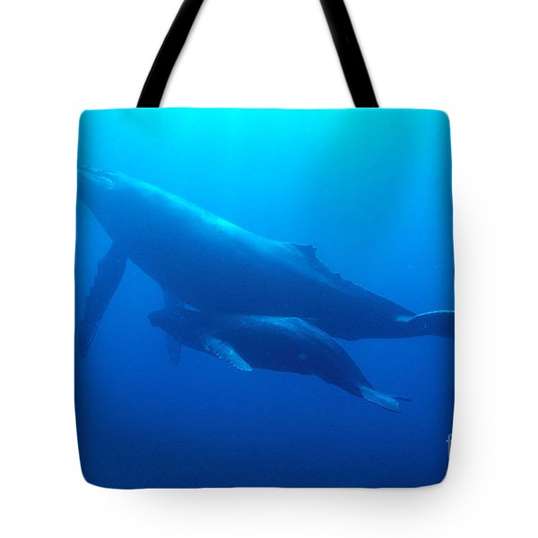 Humpback Mother And Calf Tote Bag by Ed Robinson - Printscapes