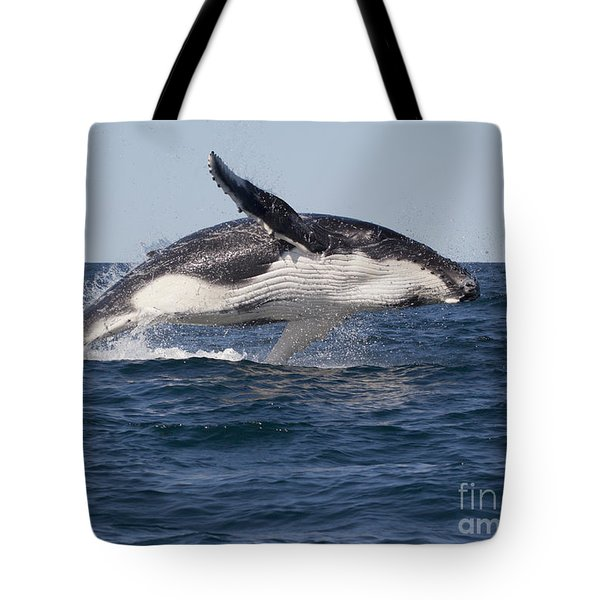 Humpback Whale Calf Breaching Tote Bag