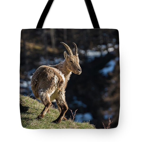 Ibex On The Mountains Tote Bag