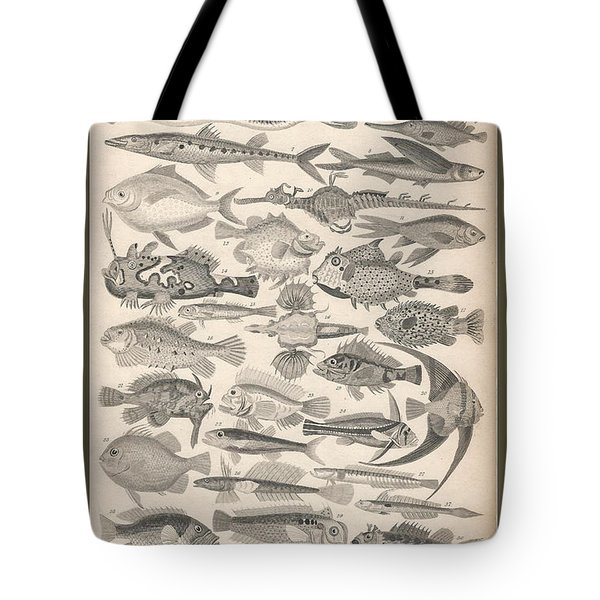 Ichthyology Tote Bag by Rob Dreyer