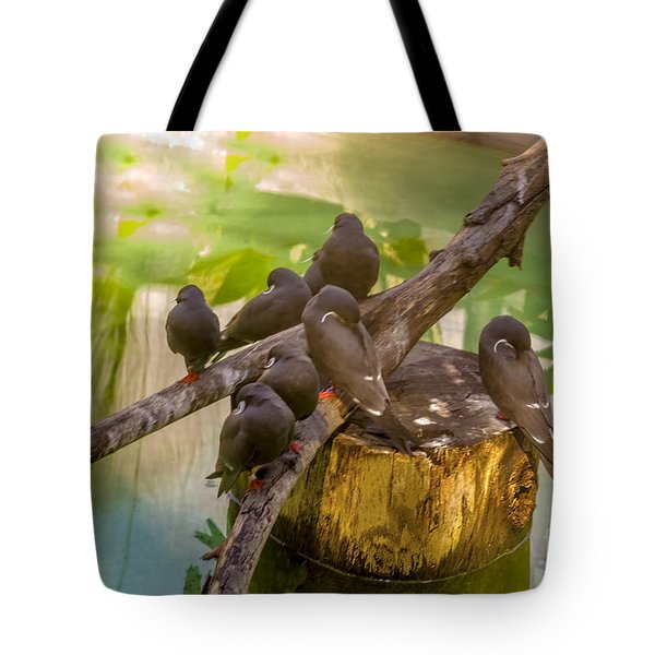 Tote Bag featuring the photograph Inca Terns by Richard J Thompson