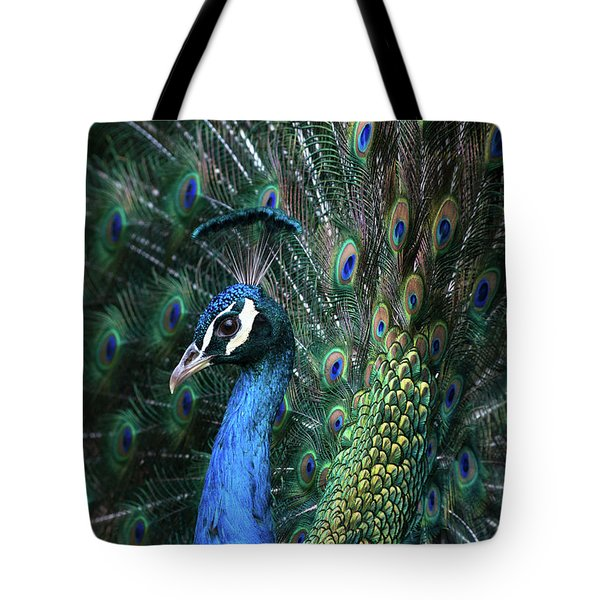 Indian Peacock With Tail Feathers Up Tote Bag