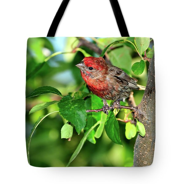 Inquisitive Tote Bag by Betty LaRue
