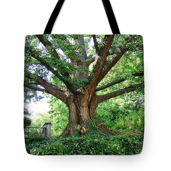 Tote Bag featuring the photograph Inwood Ginkgo  by Cole Thompson