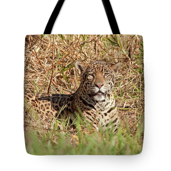 Jaguar Watching Tote Bag by Aivar Mikko