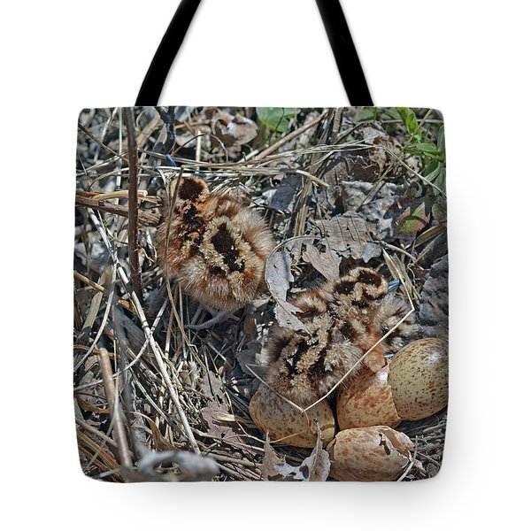 Just Hatched American Woodcock Chicks Tote Bag