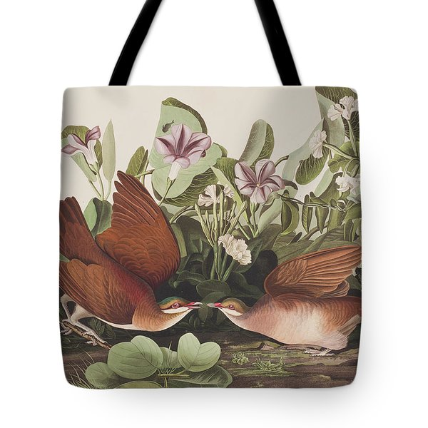 Key West Dove Tote Bag by John James Audubon