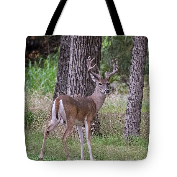Large Buck Tote Bag