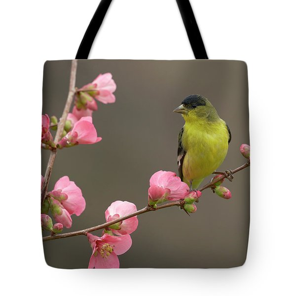 Lesser Goldfinch Tote Bag by Doug Herr