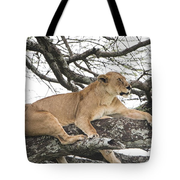 Lions In A Tree Tote Bag by Pravine Chester