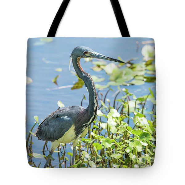 Tote Bag featuring the photograph Little Blue Heron Fishing by Michael D Miller